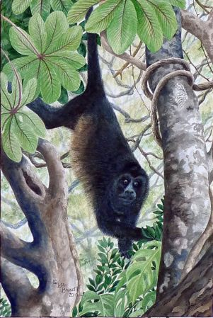 jungle congo watercolor cropped