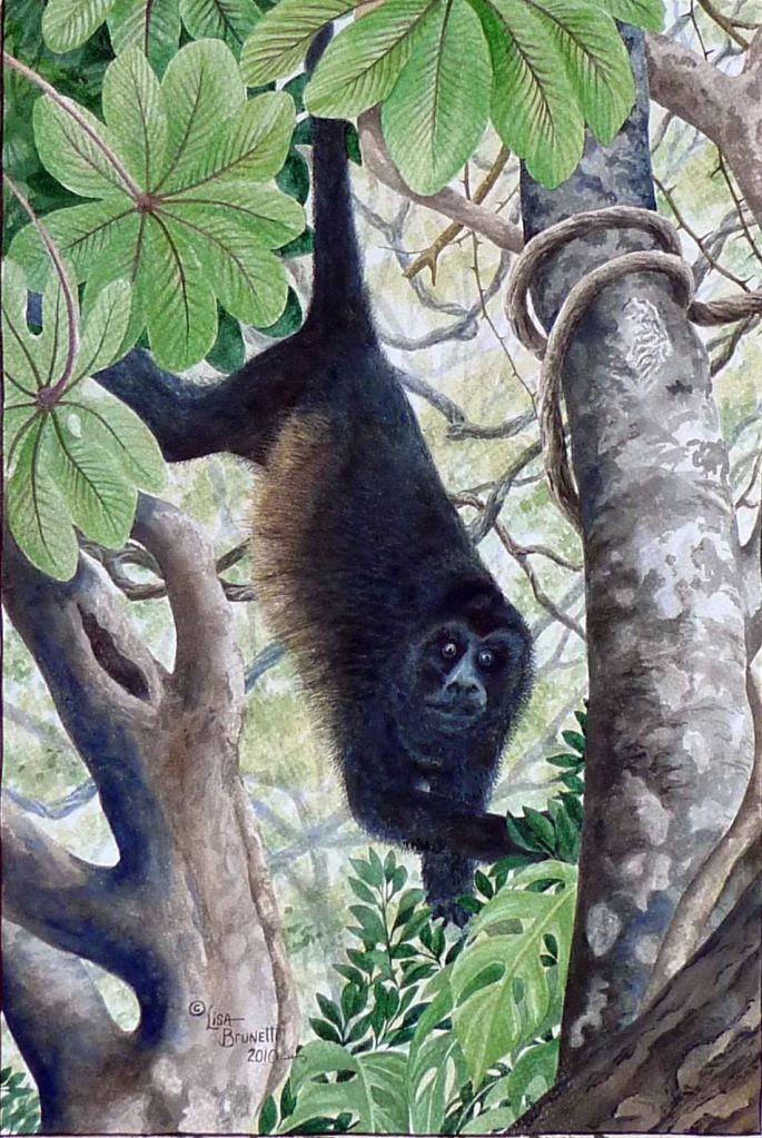 jungle congo watercolor cropped