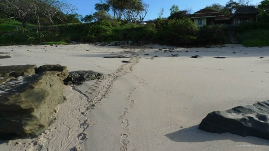 Playa Rosada Nicaragua - Thieves raided this turtle nest as well.