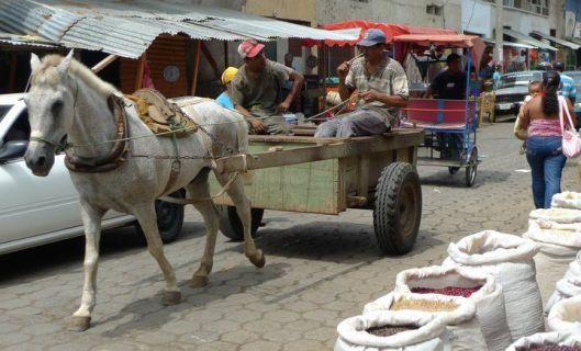 rivas horse cart friends