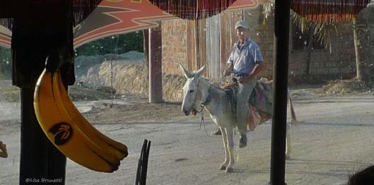 cruzita bus y burro P1550339 cropped