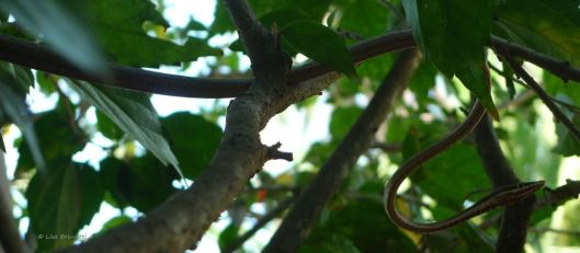 For every monkey that soars through the trees, there's a snake that creeps through the foliage with stealth!
