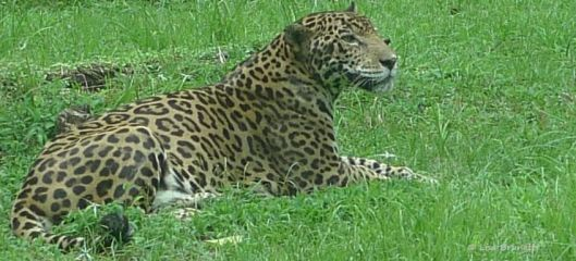 They know about the jaguar that escorted me home one full-moon night!