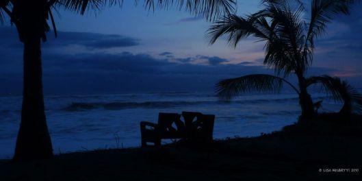 blue olive ridley sunset nestingggggggggggggggggggg