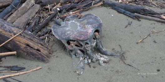 Turtles die from illegal shrimp nets from boats too close to shore.  This is wrong.