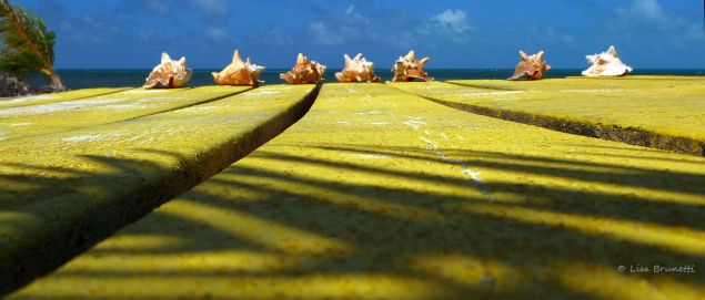 yellow LONG CAYE BELIZE P1300248