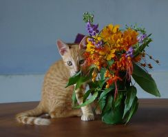 Ah! Flowers Just For Me!