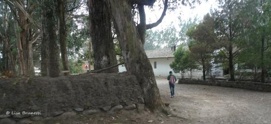 Early Morning at Hacienda Guachala - Cayambe, Ecuador