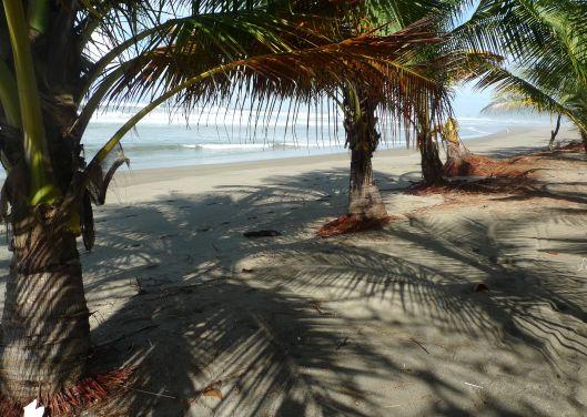 playa san miguel P1150509 palms