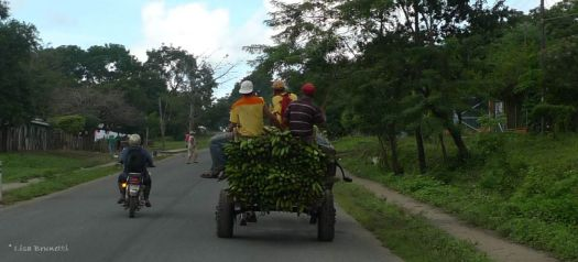 P1220486 nica green plantain wagon