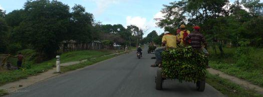 P1220487 NICARAGUA GREEN PLANTAINS leaving rivas