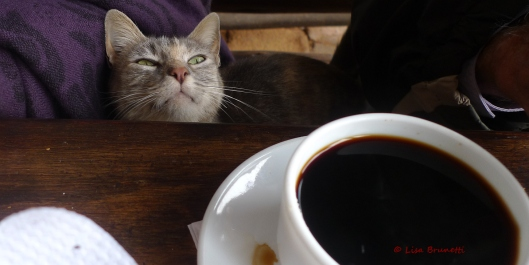 The people's favorite: Coffee Cat!
