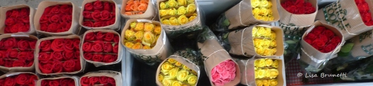 Roses from Ecuador!