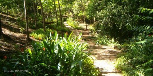 studio garden path