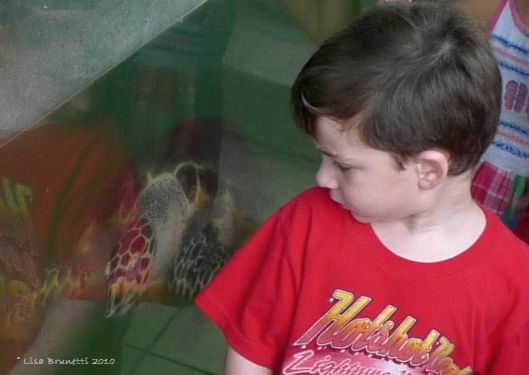 If this young man grows up to treasure our natural resources, this turtle's captivity is justified.