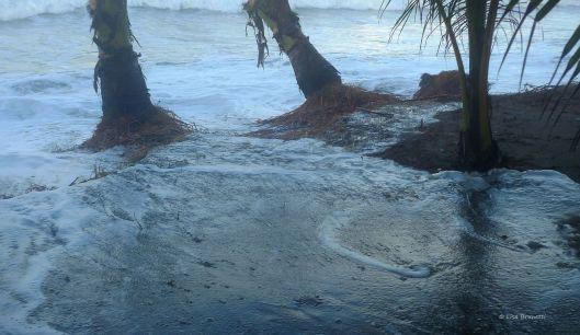 P1140774 high tide hig tides