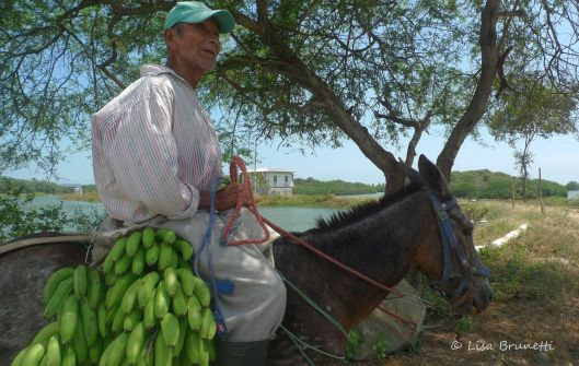 Shucks!  I was leaving for the week!  He kept riding in search of a buyer for the bananas.