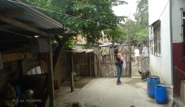We walked past the starfruit tree, and the rooster cages...