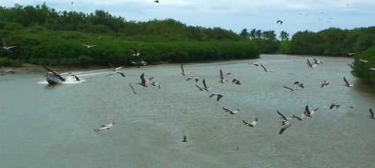 Rio jama boat y pelicans P1430610