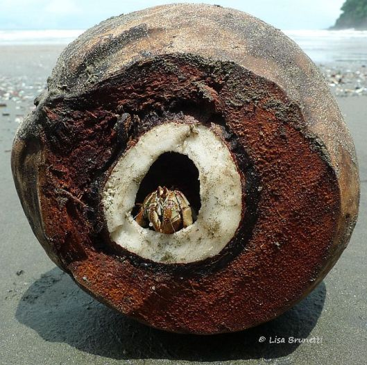 So I am forever peering into coconuts in search of treasures!