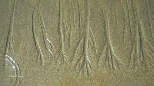 Zen symbols whispered  in the sand.