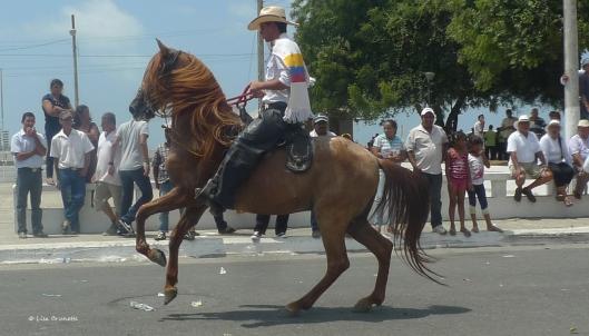 tope P1600456 cowboy