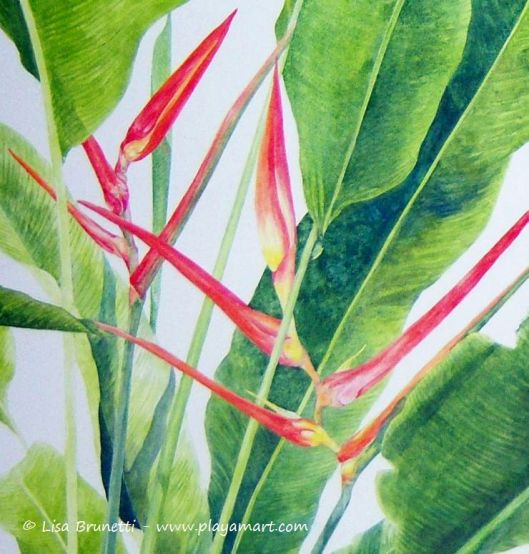 heliconia painting after the rain closeup