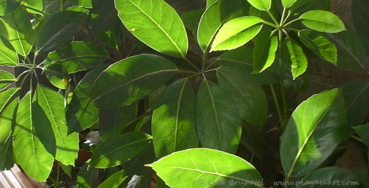 Light & Shadow Foliage Guaranda Ecuador
