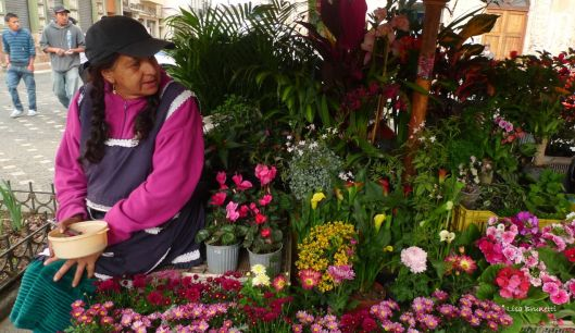 From the coastal Pacific to the Highlands of Cuenca Ecuador, the bright colors of flowers brighten the scene.