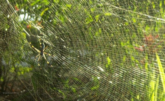 I agree with Nick, It's not fun to walk through a spider's web!