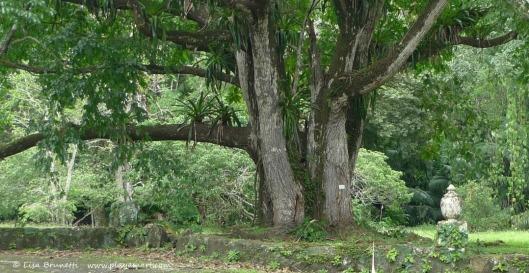 trees geat mango panama zooz