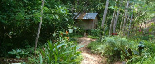 My trail led me to Costa Rica, where I lived in harmony with nature.