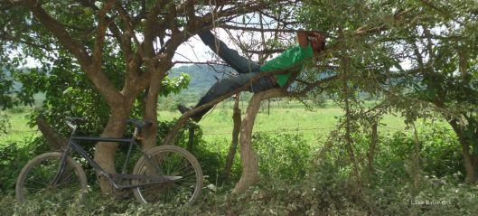 P1220572 man in tree GREEN