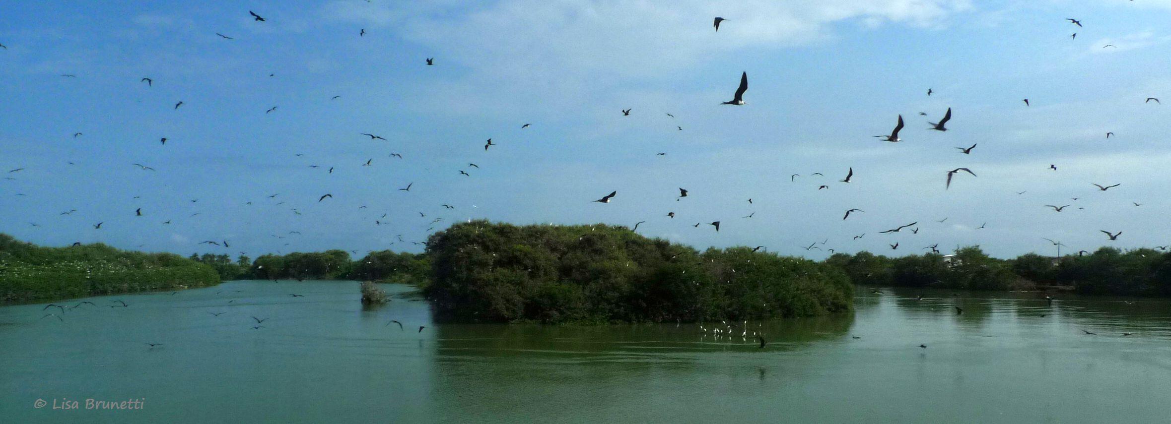 P1530191 JUNE 10 2012 HOW MANY BIRDS