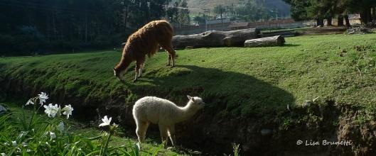 Early Morning - Hacienda Guachala - E