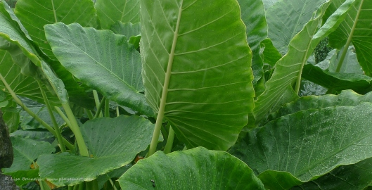 P1630139 green foliage j campay