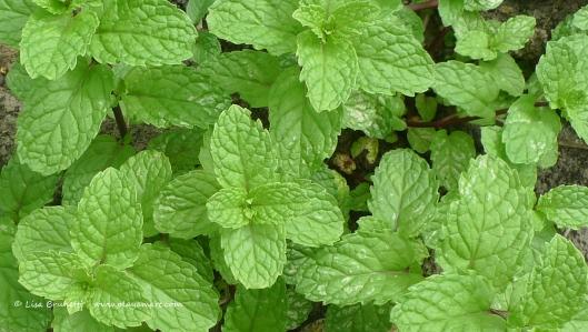 P1630305 mint green