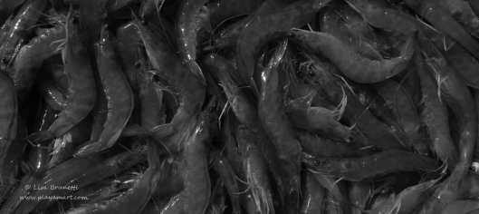 0 grayscale P1370951 shrimp