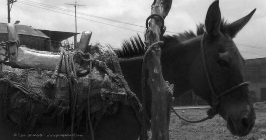 grayscalejama donkey P1330566