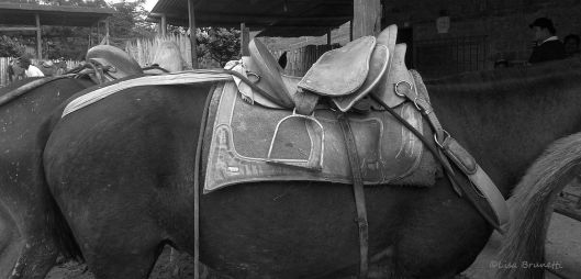 horse STA TERESA SADDLES P1490835 grayscale