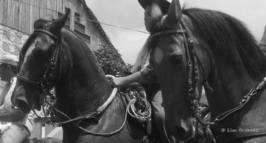 horses tope P1600421 HORSES  cabalgata san vicente grayscale