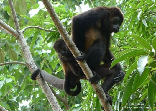 monkey y baby up