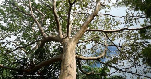 P1270415 i love this tree z up