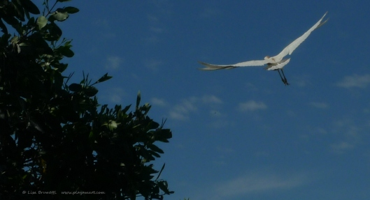 P1480770 egret up