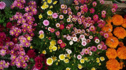 P1580725 CUENCA FLOWERS