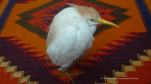 P1650787 cattle egret in house on rug