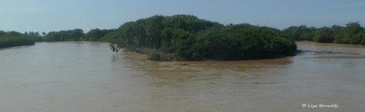 P1650911 rio jama point mangroves
