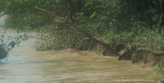 March 2013 Mangroves washing away in Rio Jama