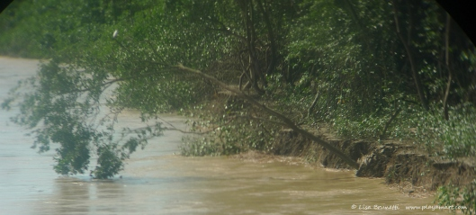 P1650915 mangroves thru binoculars