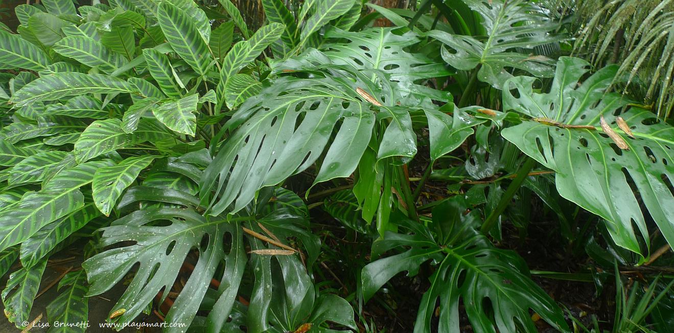 Monocotyledonous green plants (Texture)